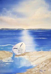 Plett Sea Pansy - The Pansy Shell